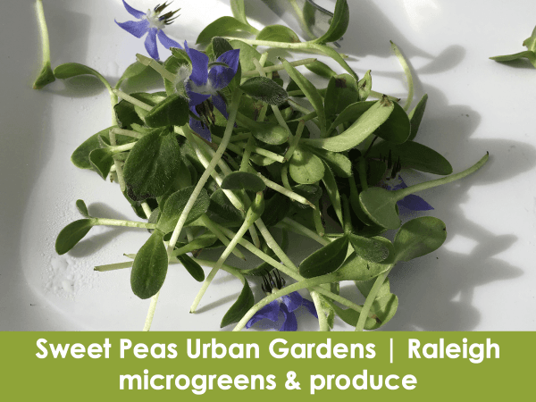 Sweet Peas Urban Gardens, Raleigh, microgreens, produce, eggs